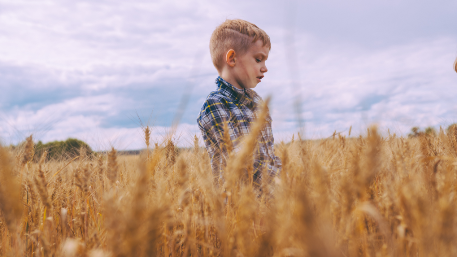 Image of a 5 Year Old Boy Standing in a Wheat Field